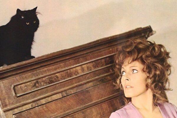 Ranking: 10 żywotów ekranowych kotów